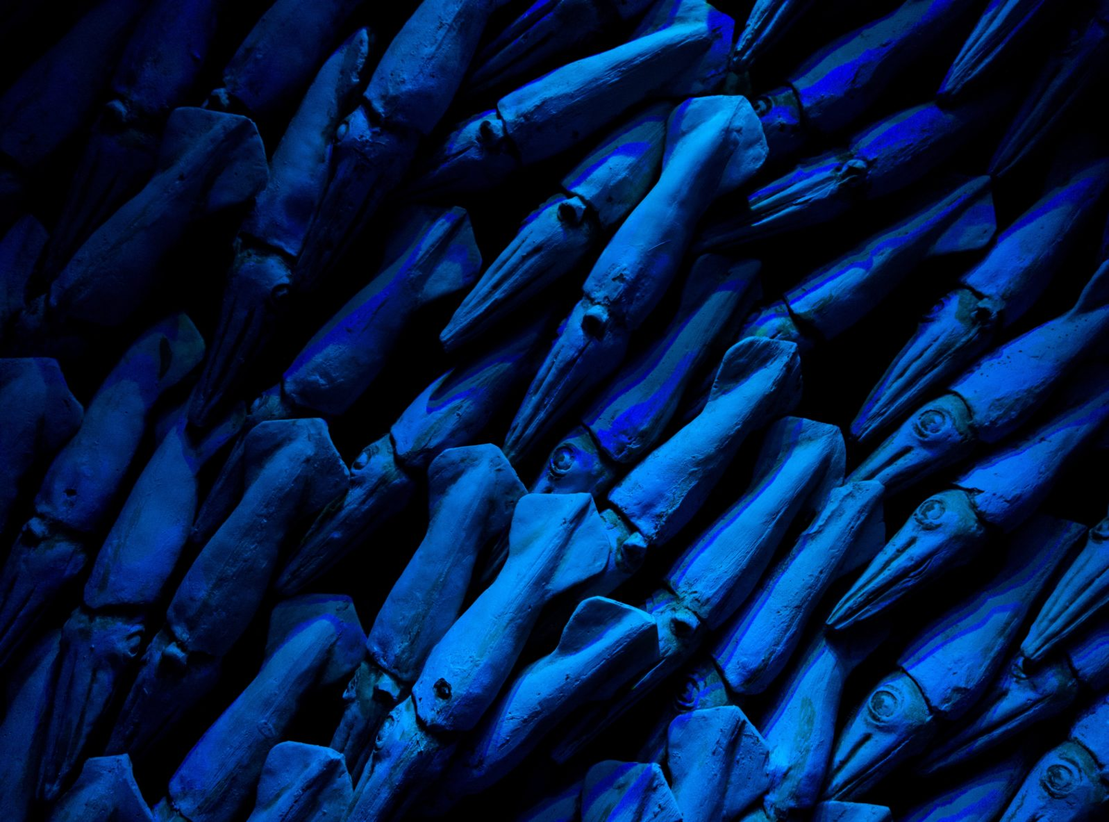 A host of blue squid